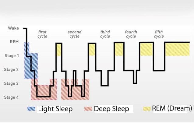 睡眠週期循環圖