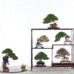台灣盆栽第一人! 日本學藝五年 返台八年得獎無數終獲肯定 周元鵬決定在台收徒傳承技藝